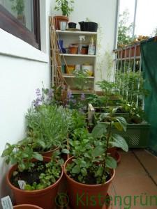 Gartenglück_vorher