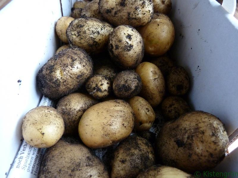 Kartoffeln_neu_kistengruen