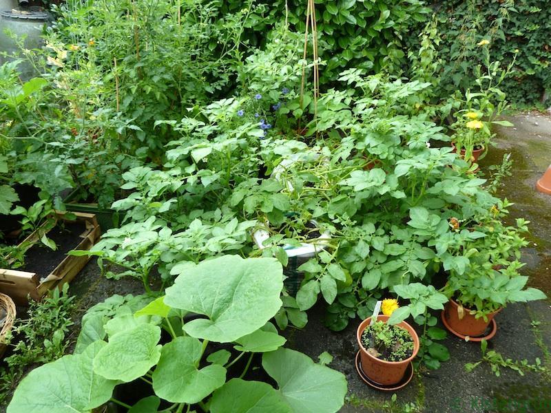 Nach dem Starkregen waren die Pflanzen zwar nicht mehr so hoch, aber immer noch üppig.