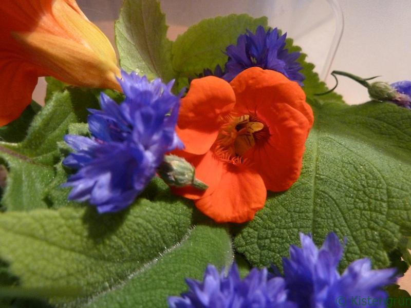 Zutaten für den Salat: Kornblumen, Fruchtsalbei, Kapuzinerkresse.