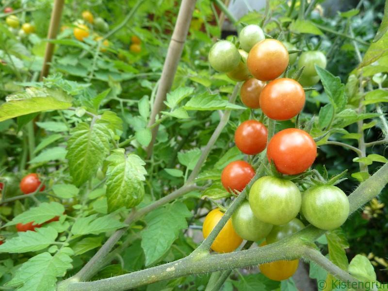 Tomaten stammen ursprünglich aus Südamerika.