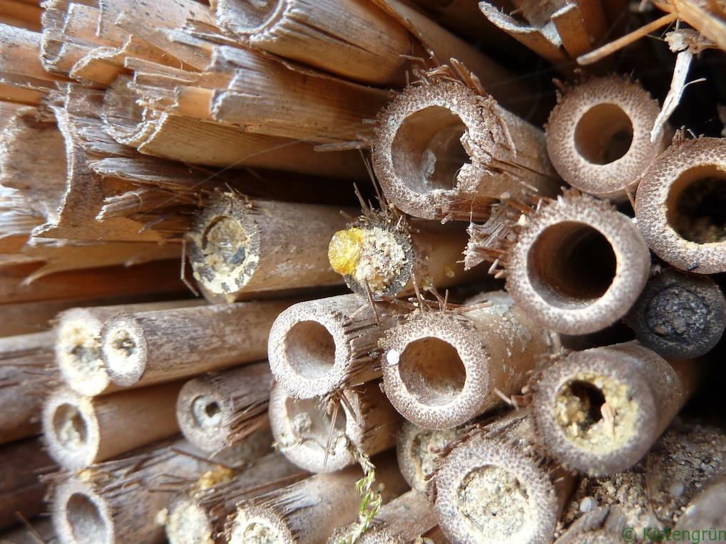 Hinter dem gold schimmernden Tropfen entwickelt sich neues Insektenleben...