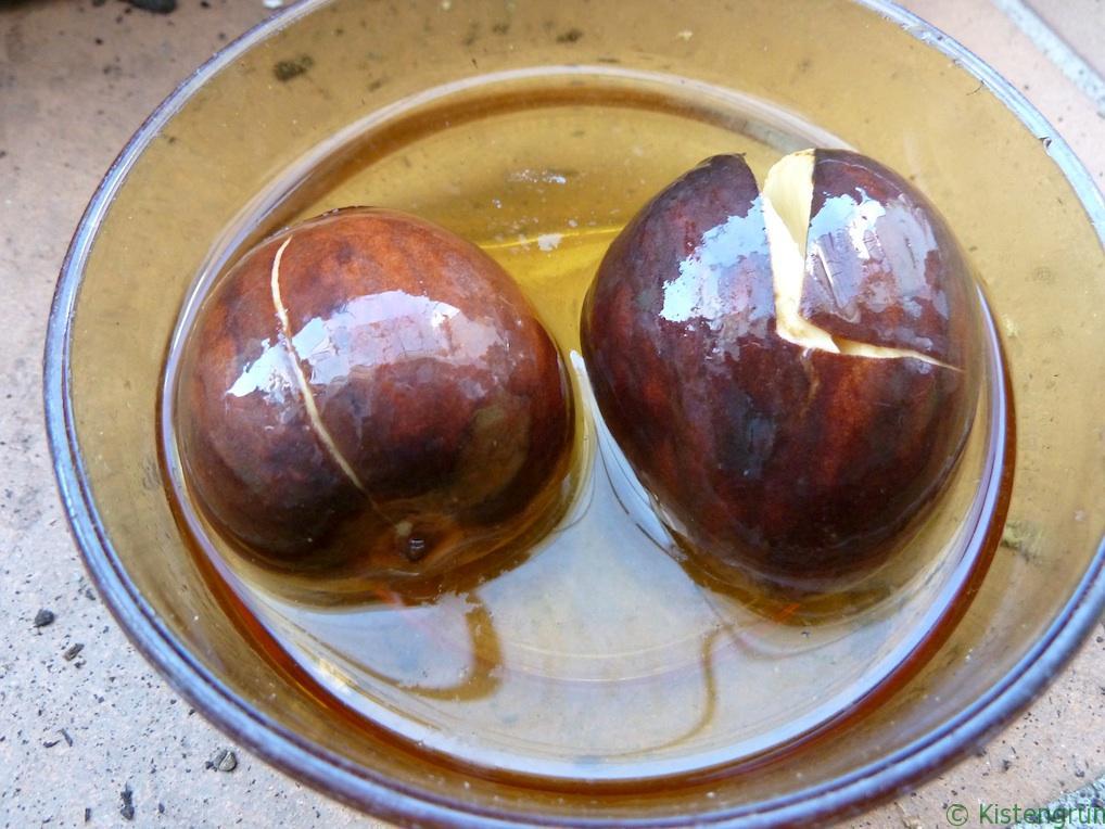 Liegen zwei Avocado-Kerne im Wasserbad...