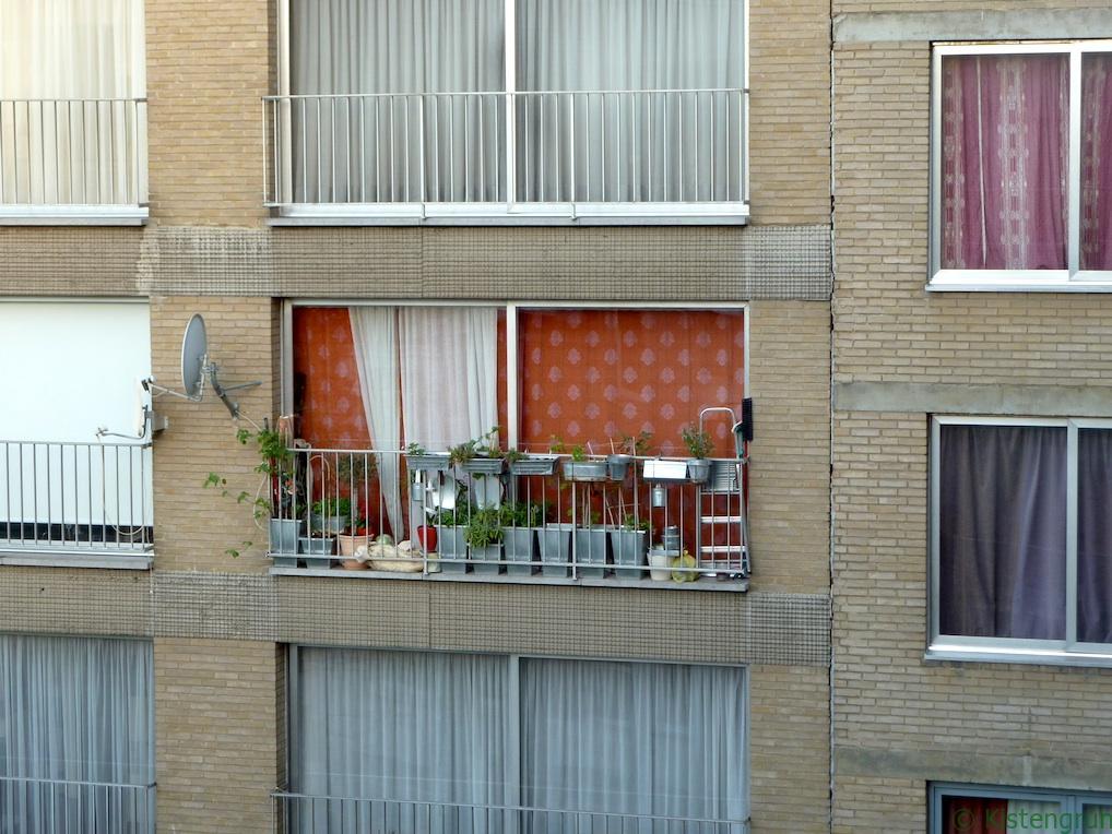 Balkongärtner in Brüssel - eher doch was für den Hinterhof?
