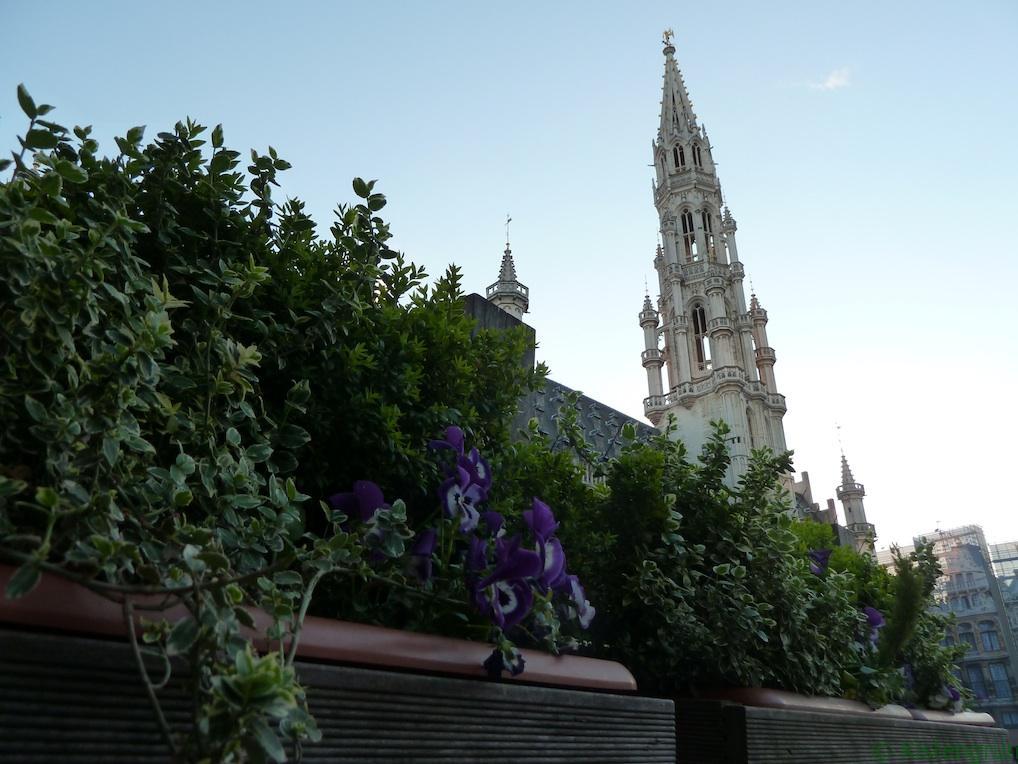 Blumen vor dem Rathaus in Brüssel. Rund um den Grand Place sorgen die Restaurants für ein wenig Grün.
