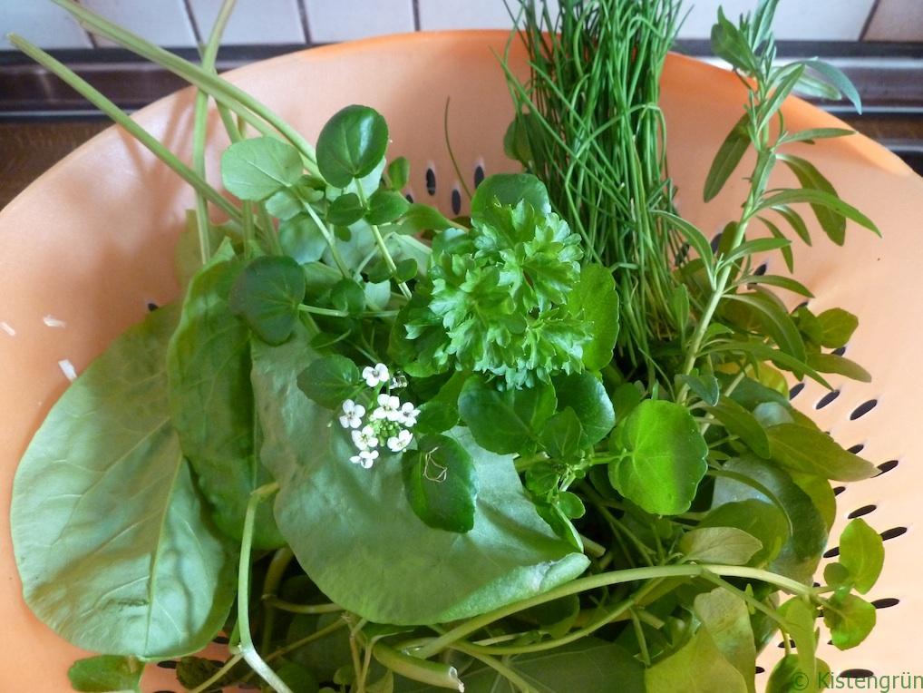 Erste Ernte vom Balkon: Salat und essbare (Wild-)Kräuter.