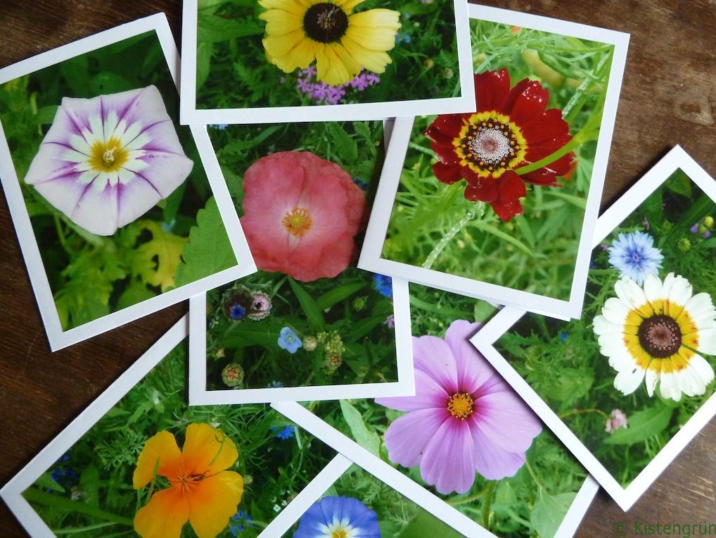 Selbstgebasltete Fotokarten mit Wildblumen