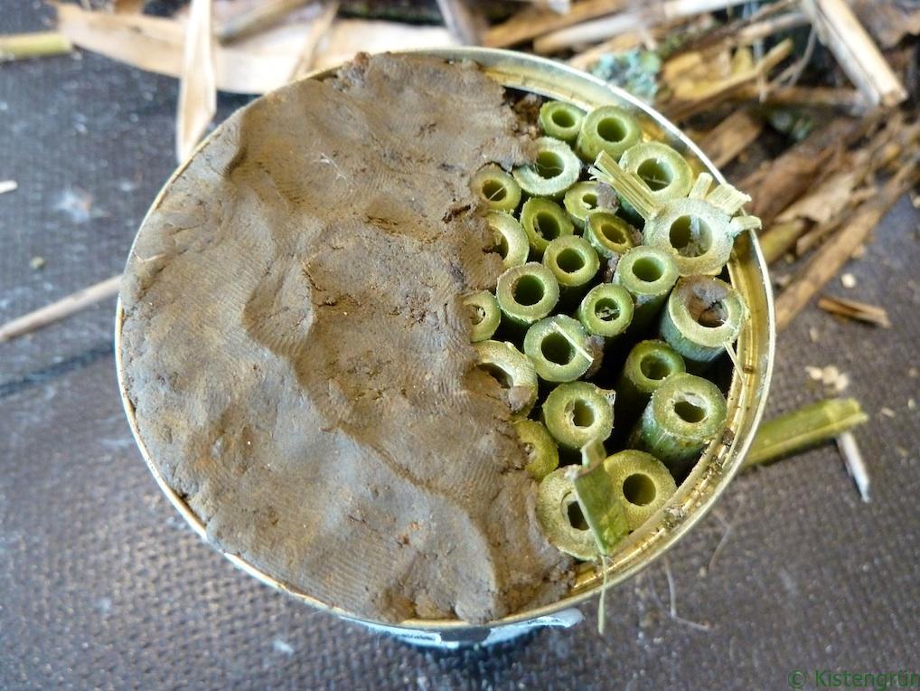 Bauanleitung: Insektenhotel in der Dose